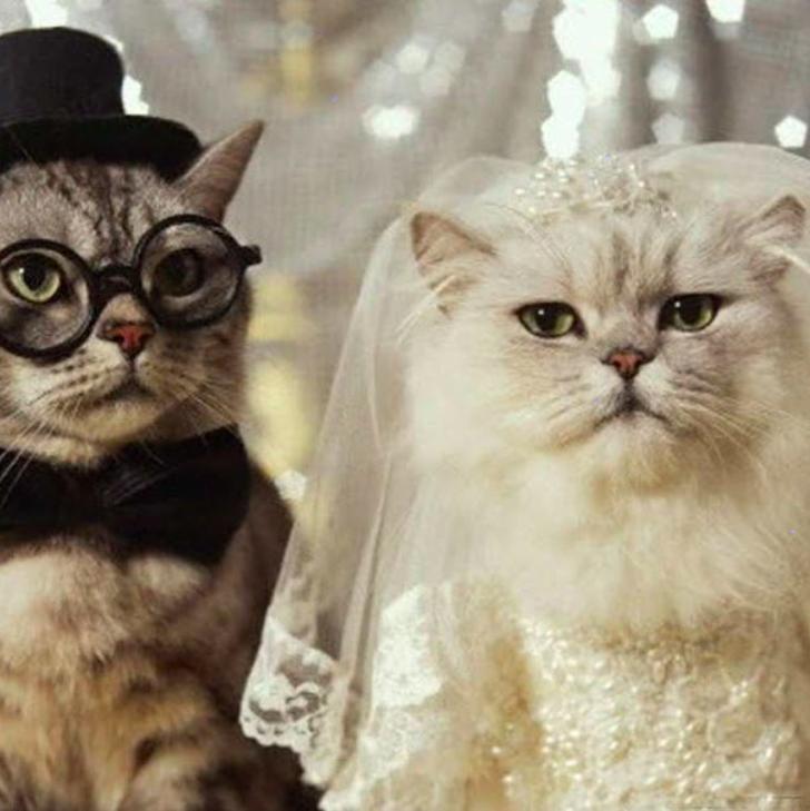 Geniale Hochzeitsfotos